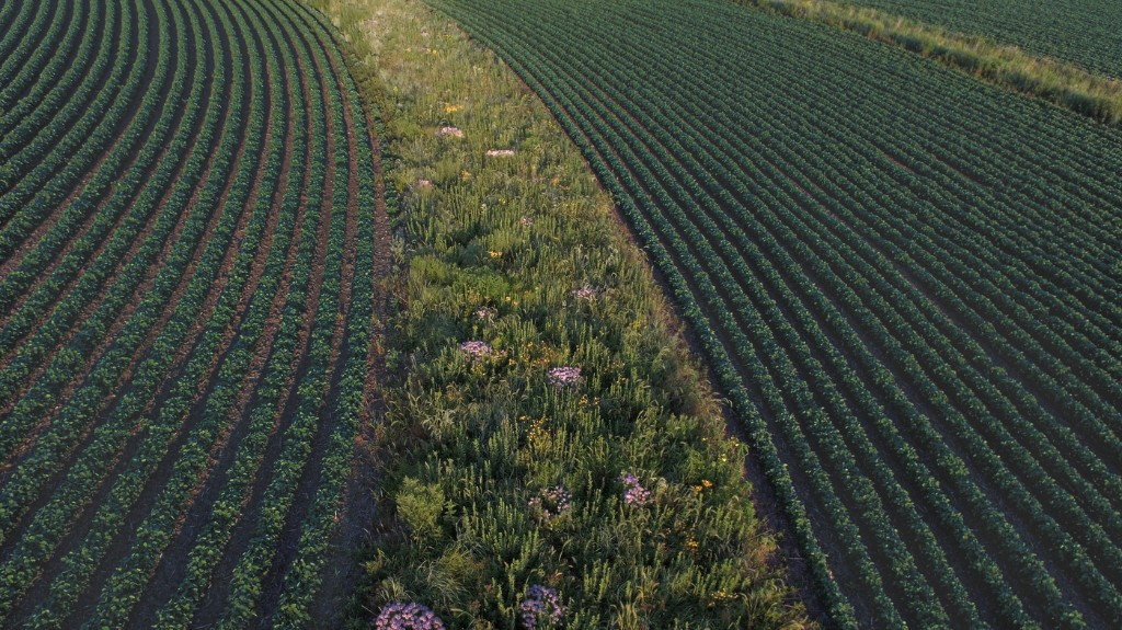 How Absentee Landowners Keep Farmers From Protecting Water And Soil