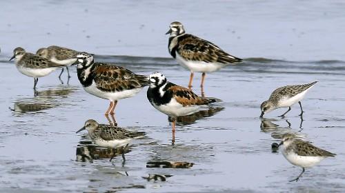 North America Has Lost 3 Billion Birds, Scientists Say