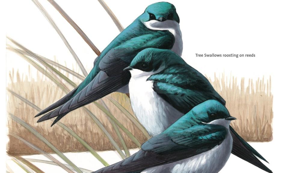 Birding cover image