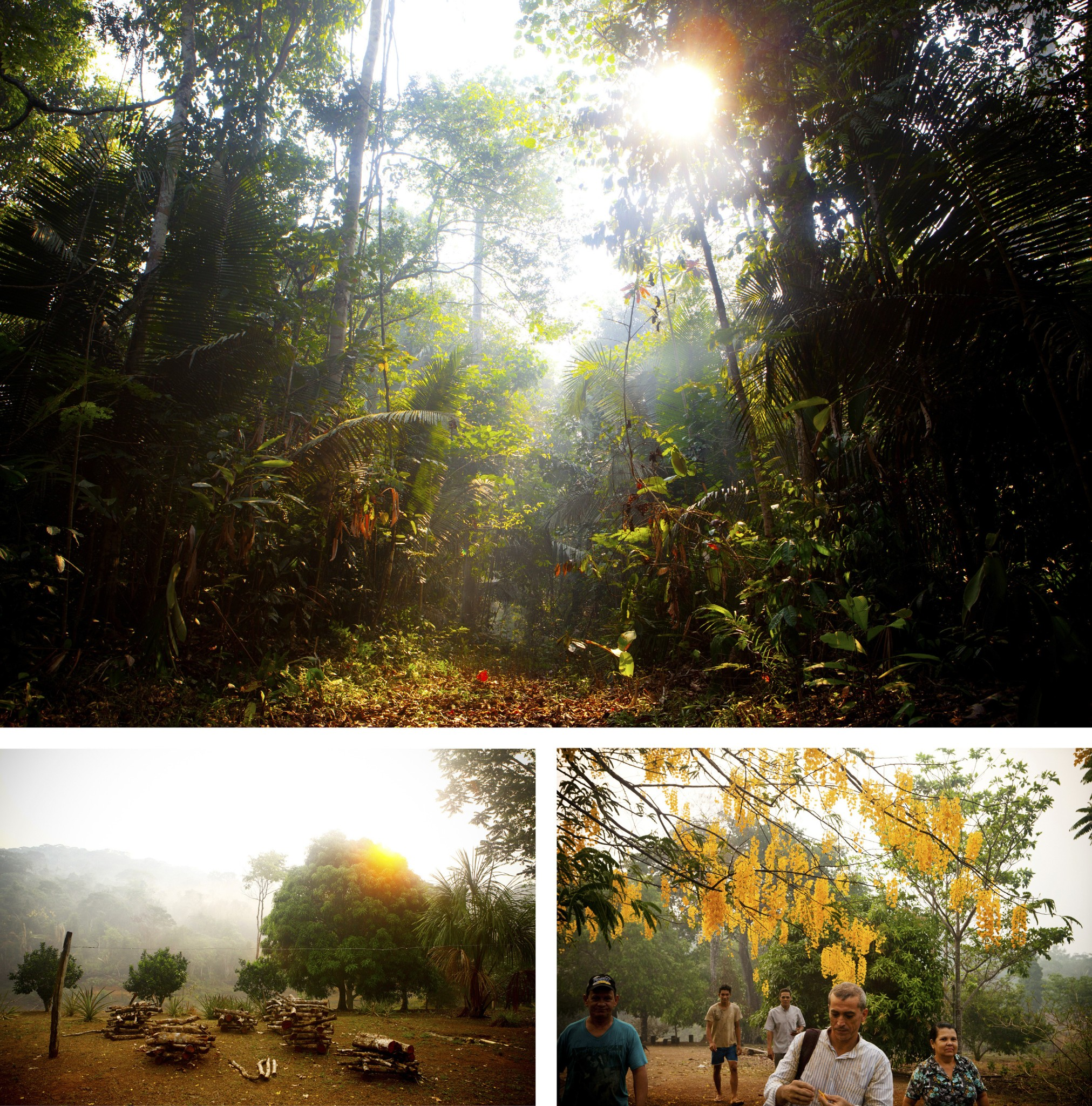 Deep In The Amazon, An Unseen Battle Over The Most Valuable Trees