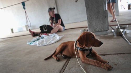 No 'Easy Answer' To Growing Number Of Stray Dogs In The U.S., Advocate Says