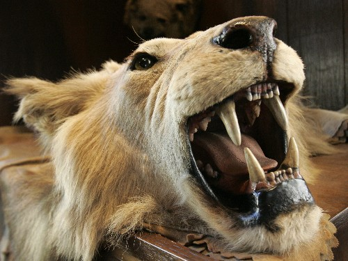 Controversial Trophy Hunting Council Disbanded Amid Legal Battle