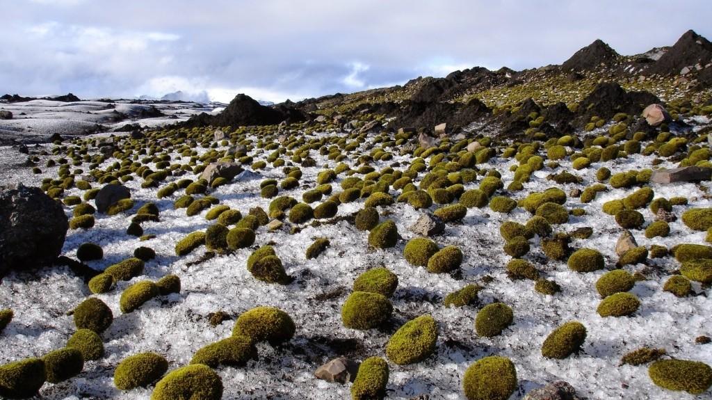 Herd Of Fuzzy Green 'Glacier Mice' Baffles Scientists
