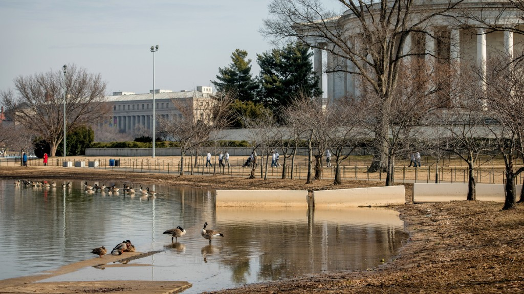 Landscape Architects Unveil Plans To Save The National Mall's Tidal Basin
