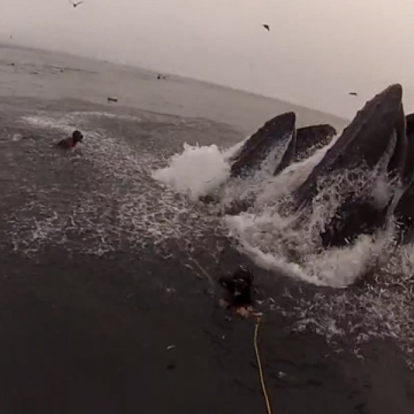 WATCH: Whale Almost Eats Diver