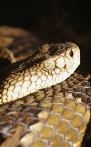 The Town That Lives with Rattlesnakes