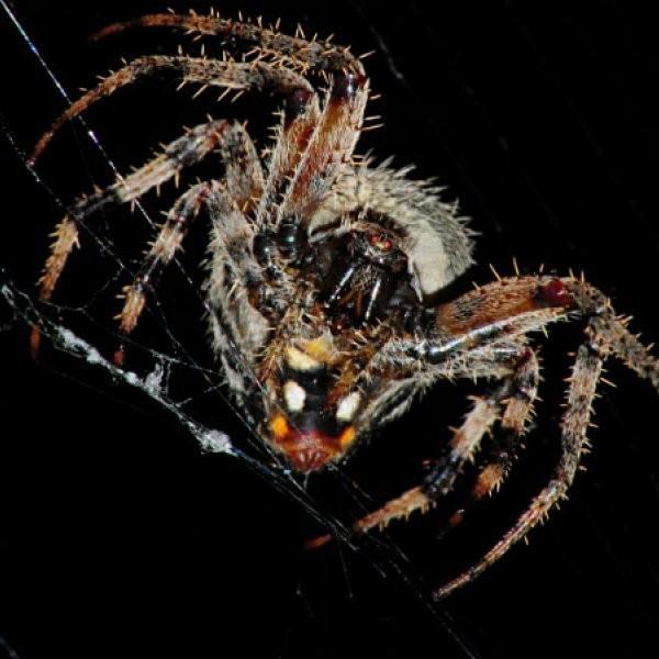 Spiders Could Fix Your Broken Bones
