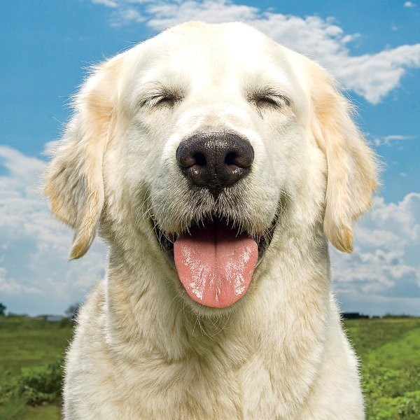 How Dogs Laugh With You, Not At You