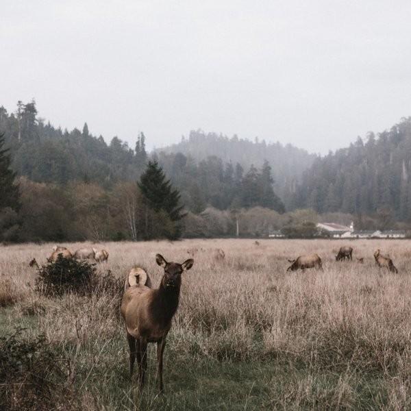 Are You an Elk Parent or a Bison Parent?