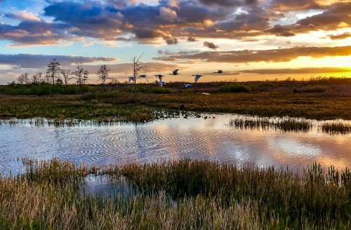 The Ultimate Everglades National Park Travel Guide