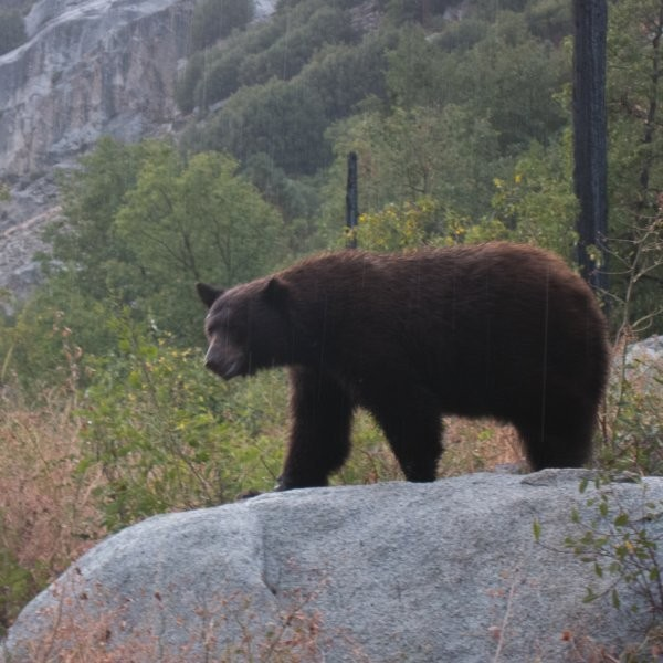 The Ultimate Guide to Protecting Food from Bears