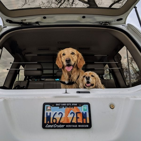 What's the Best Way to Keep Your Dog Safe in a Car?