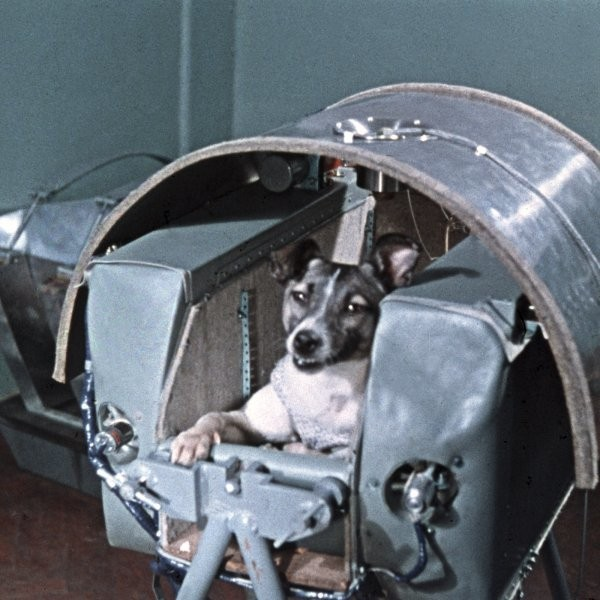 The Very Good Adventure Dogs of History