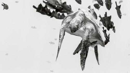 The Ocean Life We're Losing