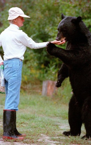 What Killed the Bear Lady?