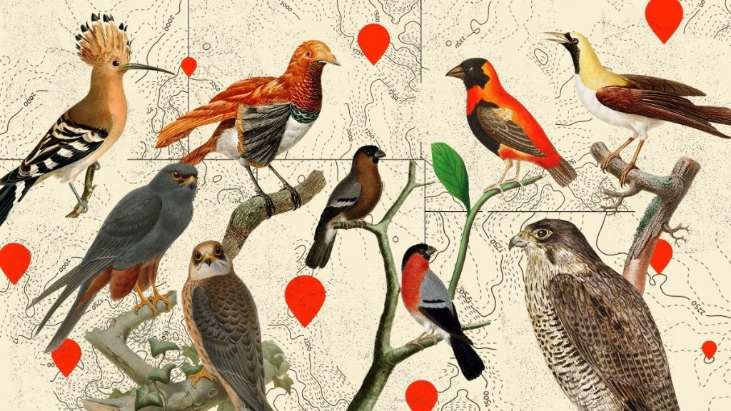 How This Online Community Changed Birding Forever