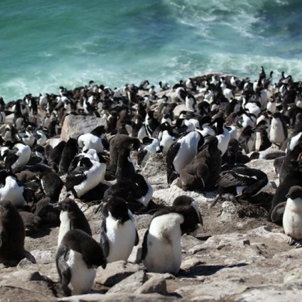 WATCH: Bird Films Penguin Colony