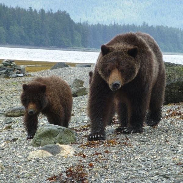 Visiting Alaska's Fortress of Bears