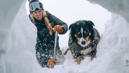 The Remarkable Skills of Rescue Dogs