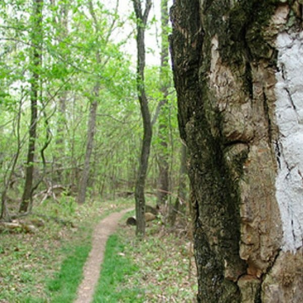What Are the Best Appalachian Trail Hikes?