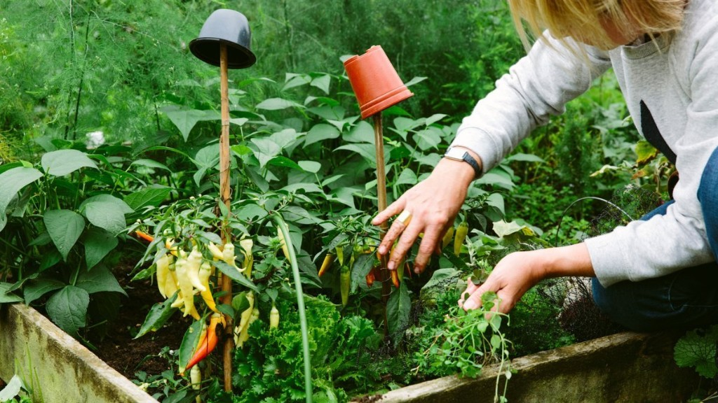 Why We're All Gardening and Baking So Much
