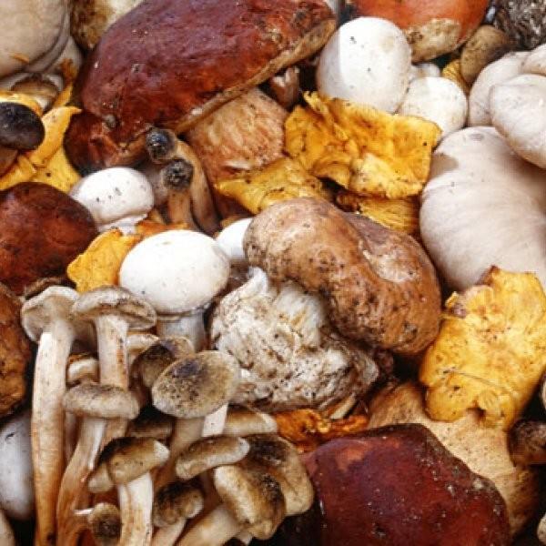 Does the Mushroom Love Its Plucker?