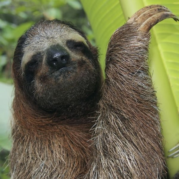 Sloth Mysteries Revealed