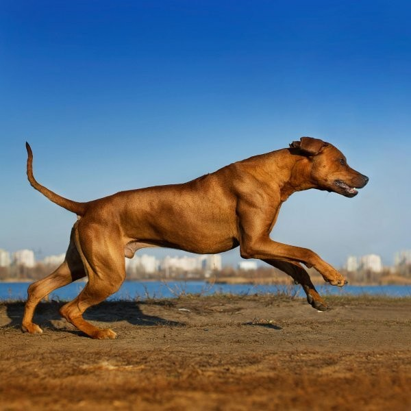 The 20 Best Dog Breeds for Runners