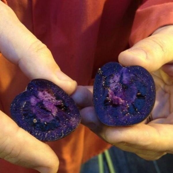 Purple Tomatoes: The Next Superfood?