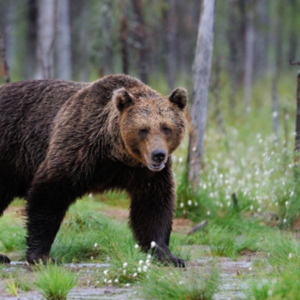 80-Year-Old Fights and Escapes Bear