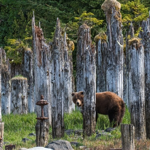 Why Hunting a Single Grizzly Bear Is Such a Big Deal