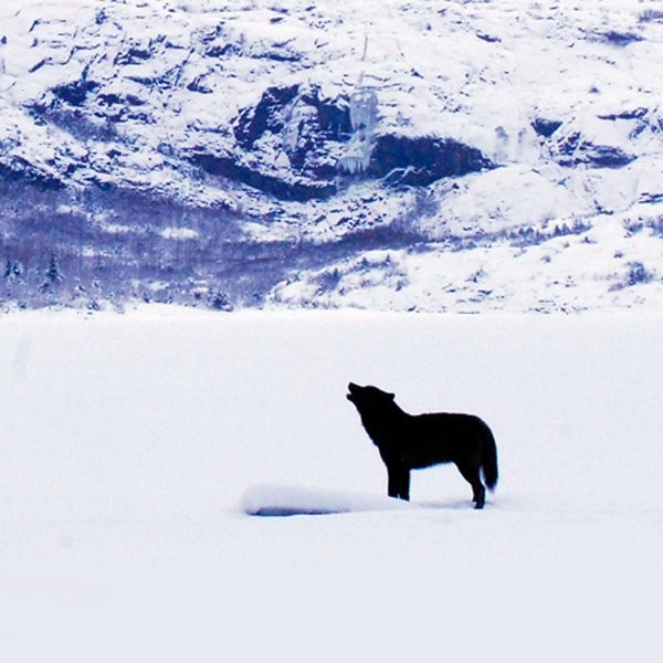 How One Wolf Charmed an Entire Town