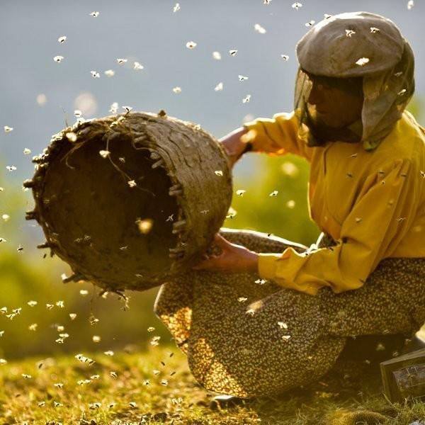 3 New(ish) Nature Documentaries You Need to Watch