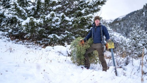How to Harvest Your Own Christmas Tree