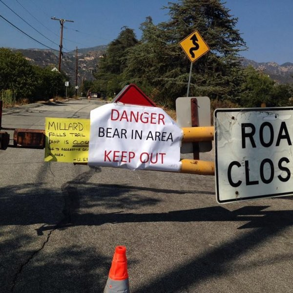 No, Los Angeles, It's Not Bearmageddon. Yet.