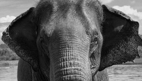 I Bought an Elephant to Find Out How to Save Them