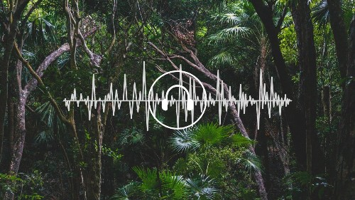 What A.I. Hears in the Rainforest