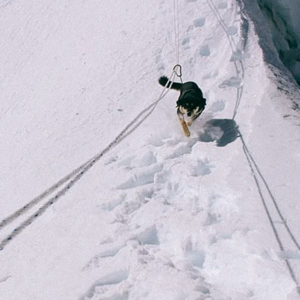 The First Dog Ascent of a 7,000-Meter Himalayan Peak