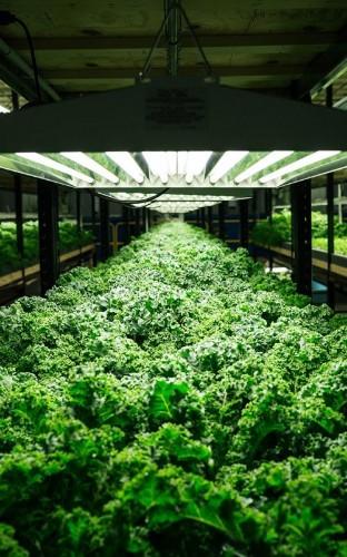 Urban Organics Wants to Fix Food