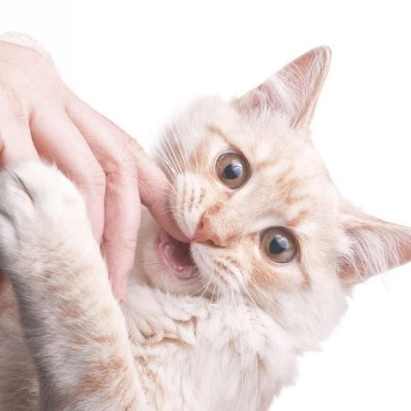 Cat Bites Linked to Depression