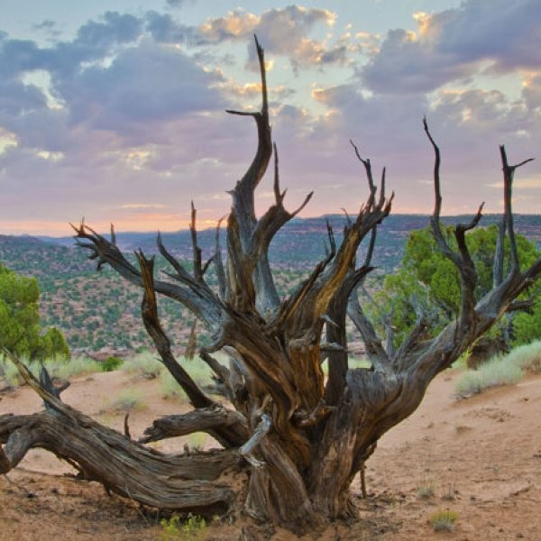 How the Arcane Antiquities Act Helps Save National Parks