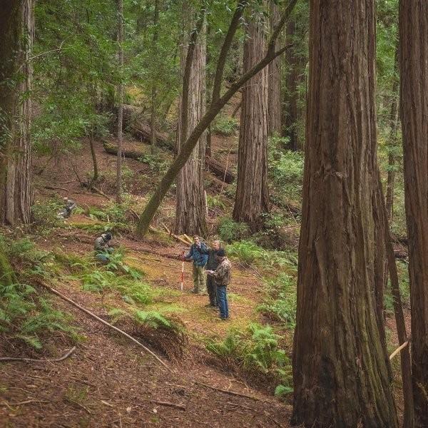 Harold Richardson Redwoods Reserve Is Going Public