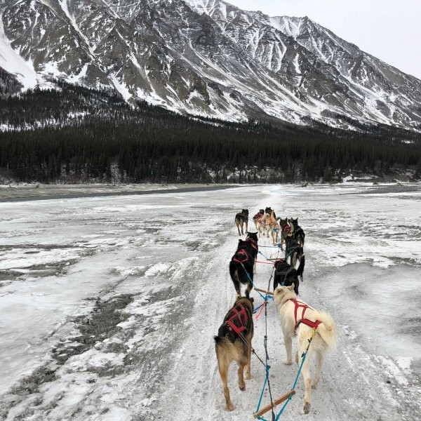 Blair Braverman on the Iditarod, Fear, and Resilience