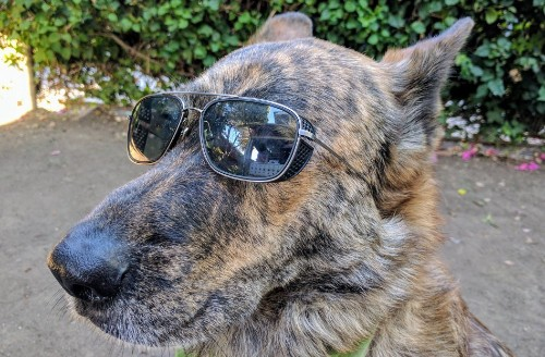 The Best Sunglasses Ever