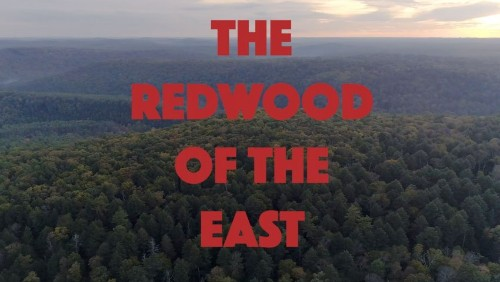 The Redwood of the East