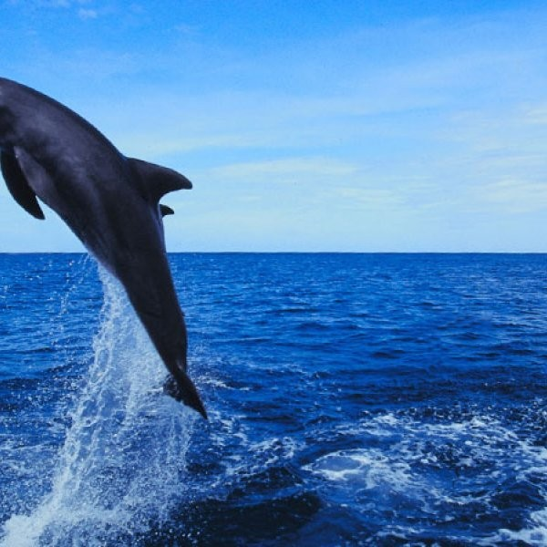 Dolphins' Surprising Power Output