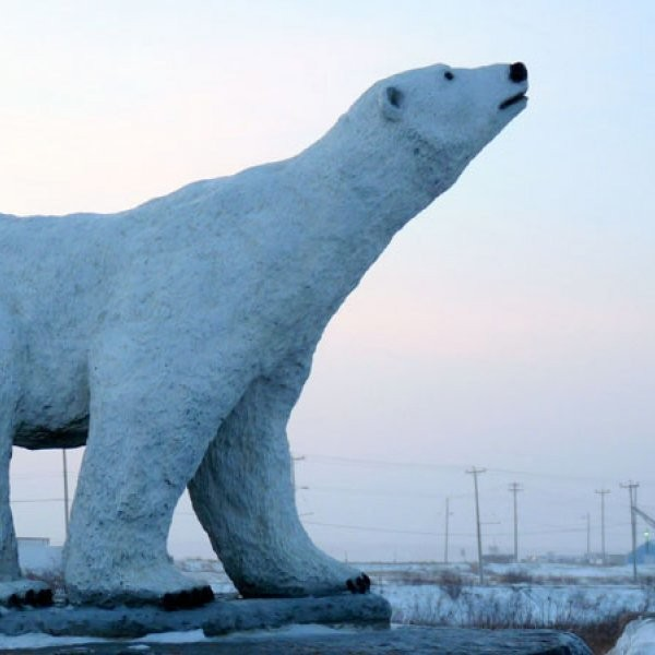 Polar Bear Attacks on the Rise