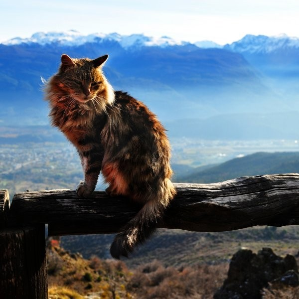The Art of Creating an Adventure Cat