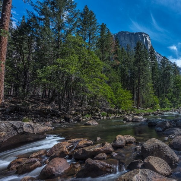Another Yosemite Visitor May Have Plague