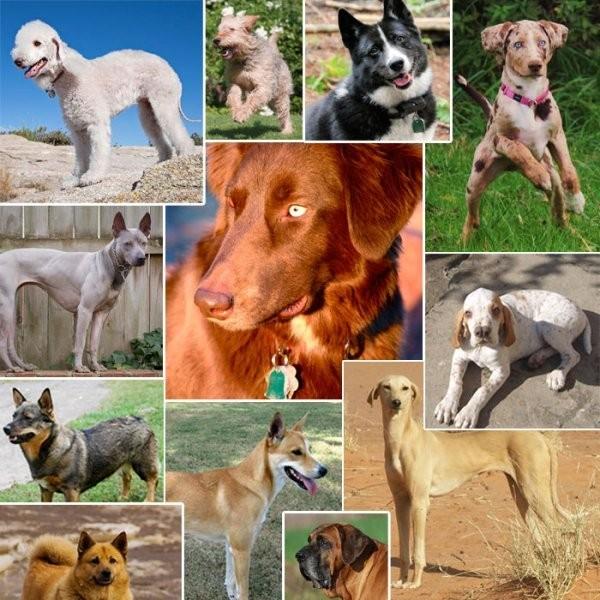 20 of the World's Rarest Dog Breeds